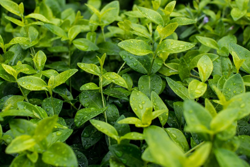 Groundcover Flat $34.99