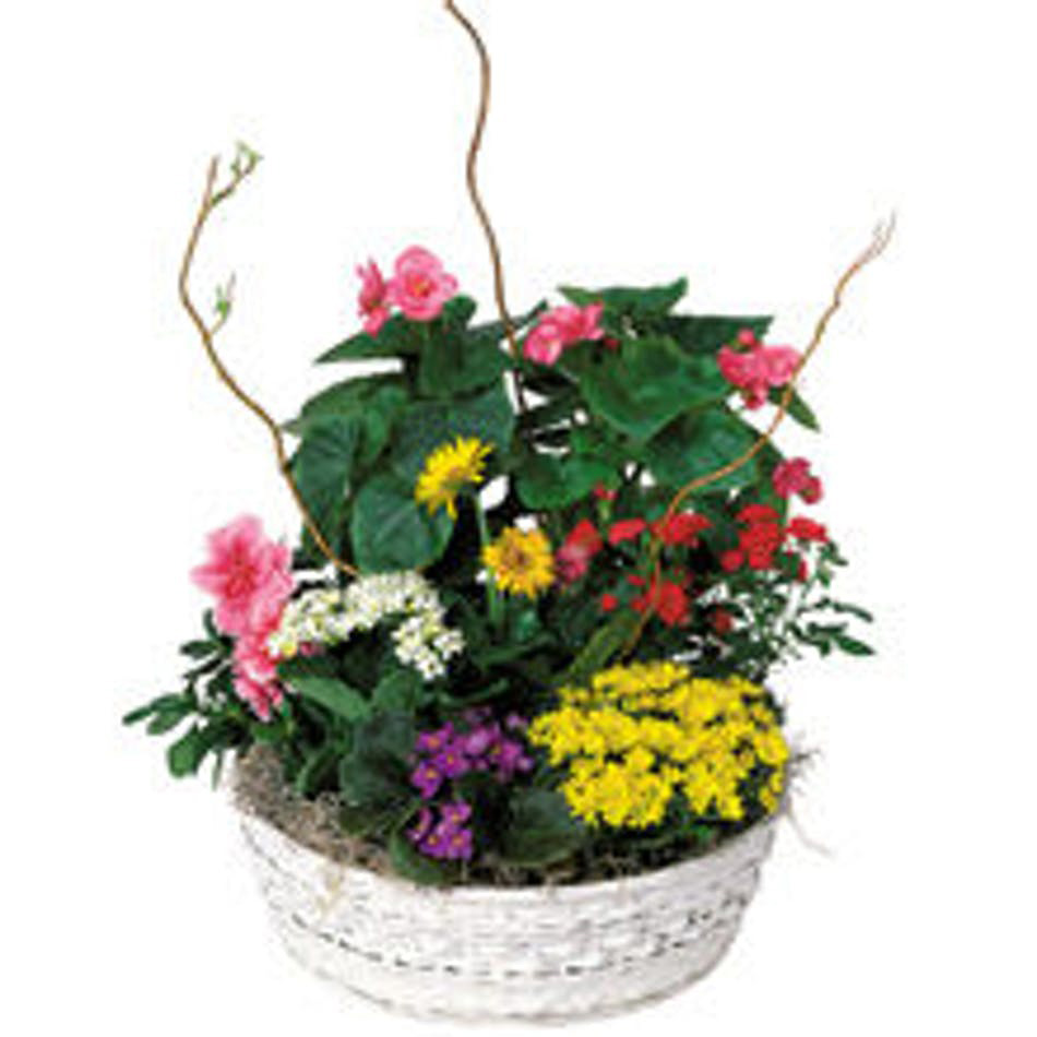 Blooming basket 2.jpg