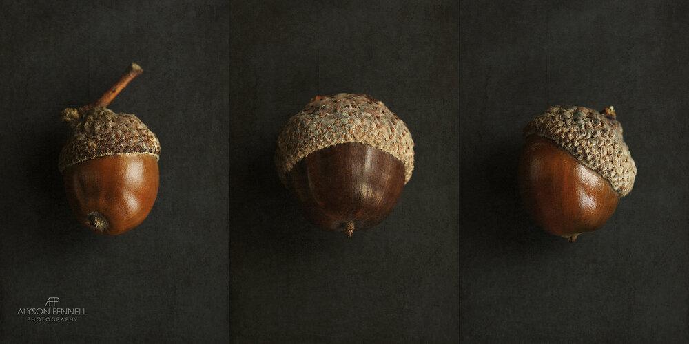 Brown Acorn Triptych