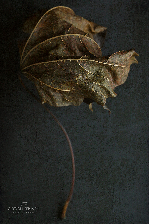 Dried Autumn Leaf