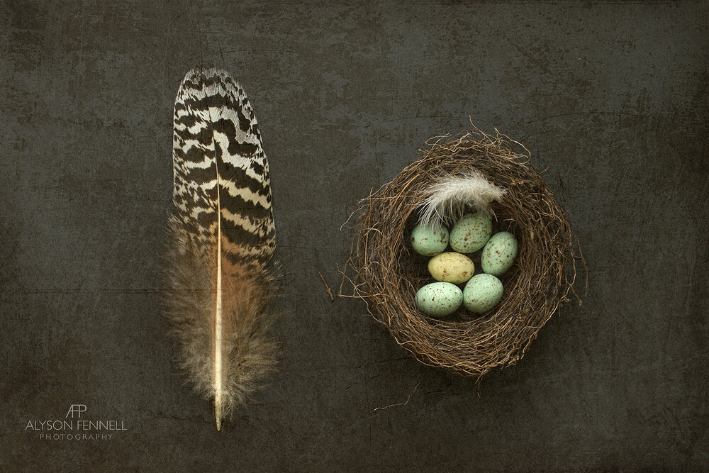 Speckled Feather and Bird's Nest