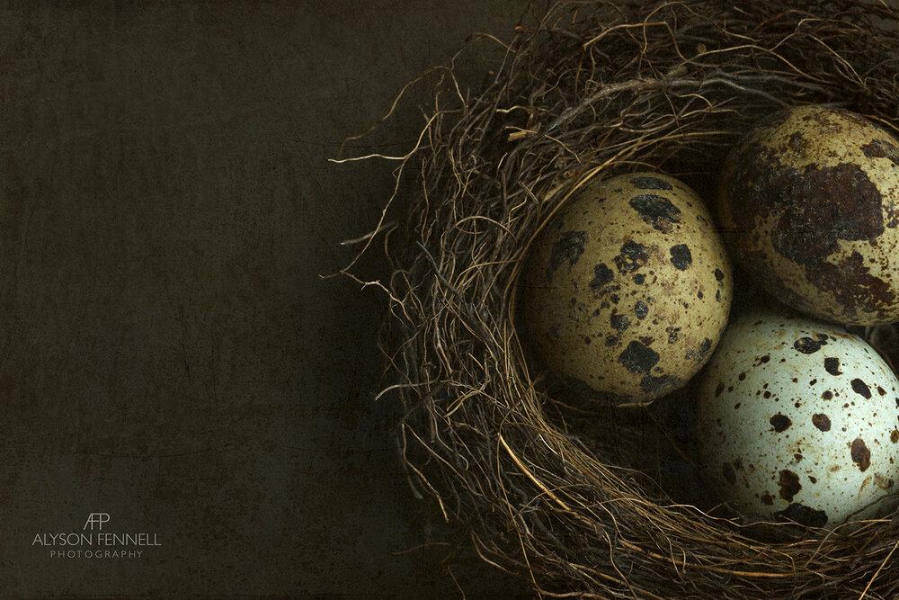Bird's Nest and Quail's Eggs