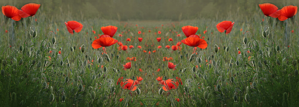 Poppy Field Symmetry