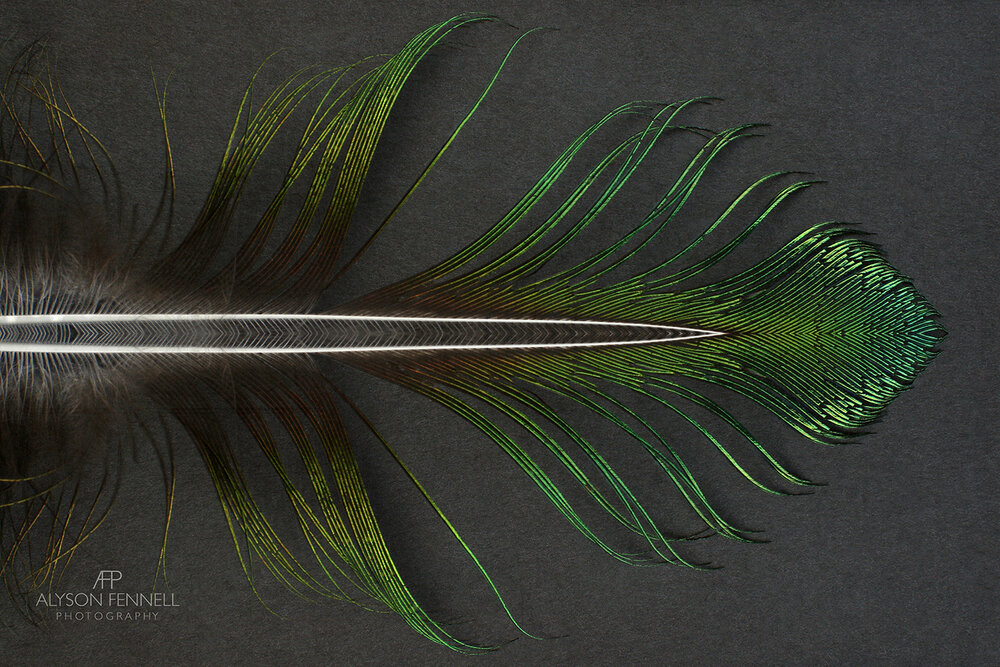 Green Peacock Feather Dart