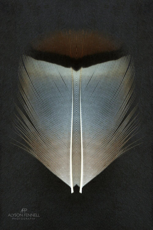 French Partridge Symmetry