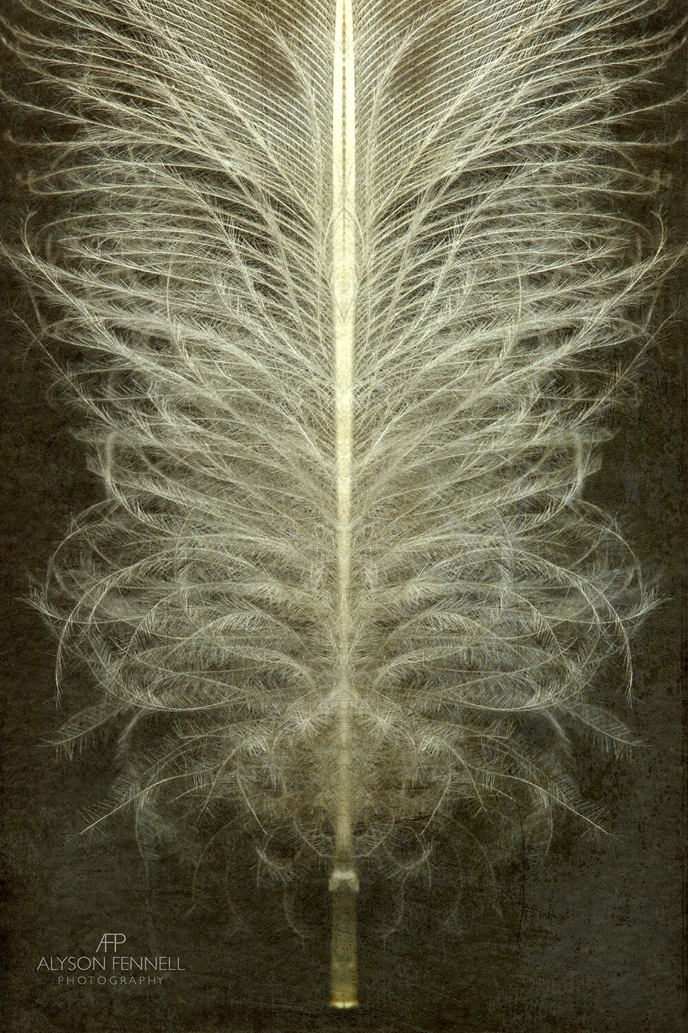 Duck Feather Symmetry