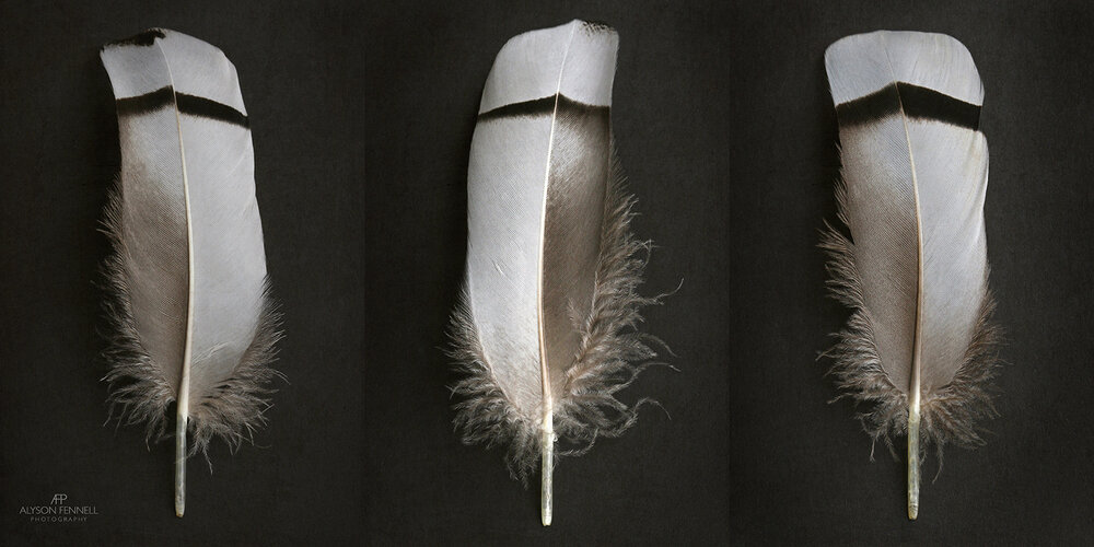 Egyptian Goose Feather Triptych