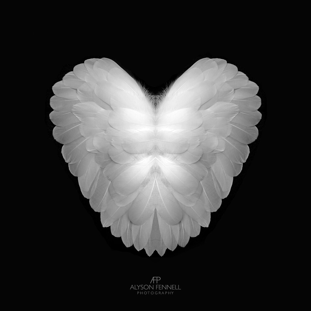 Angel Feather Heart
