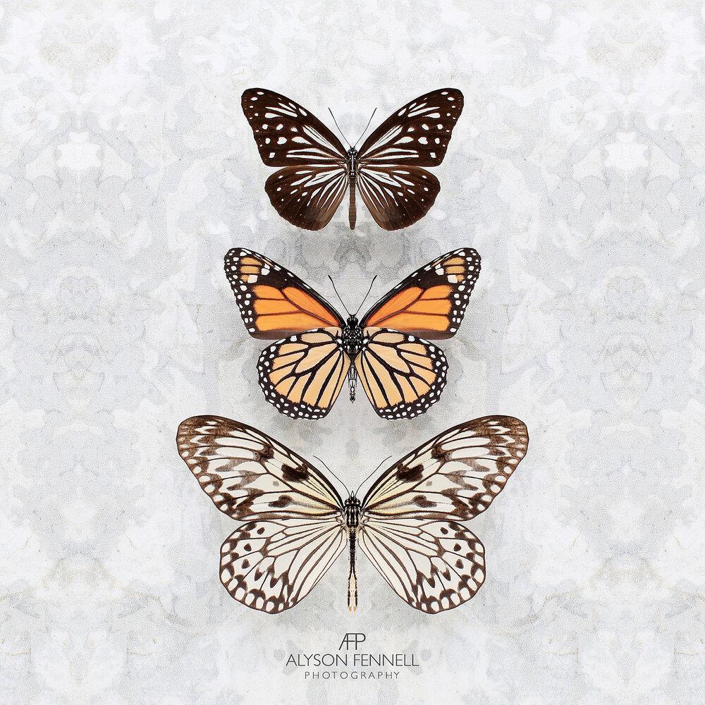Three Speckled Butterflies