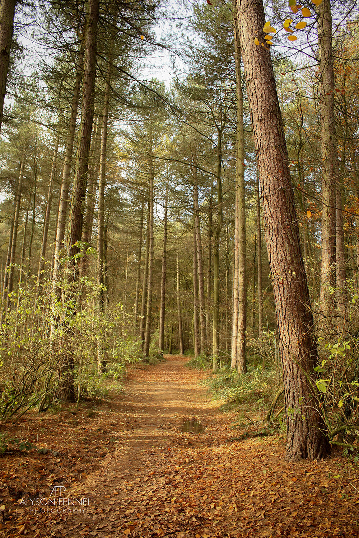 Pine Tree Avenue