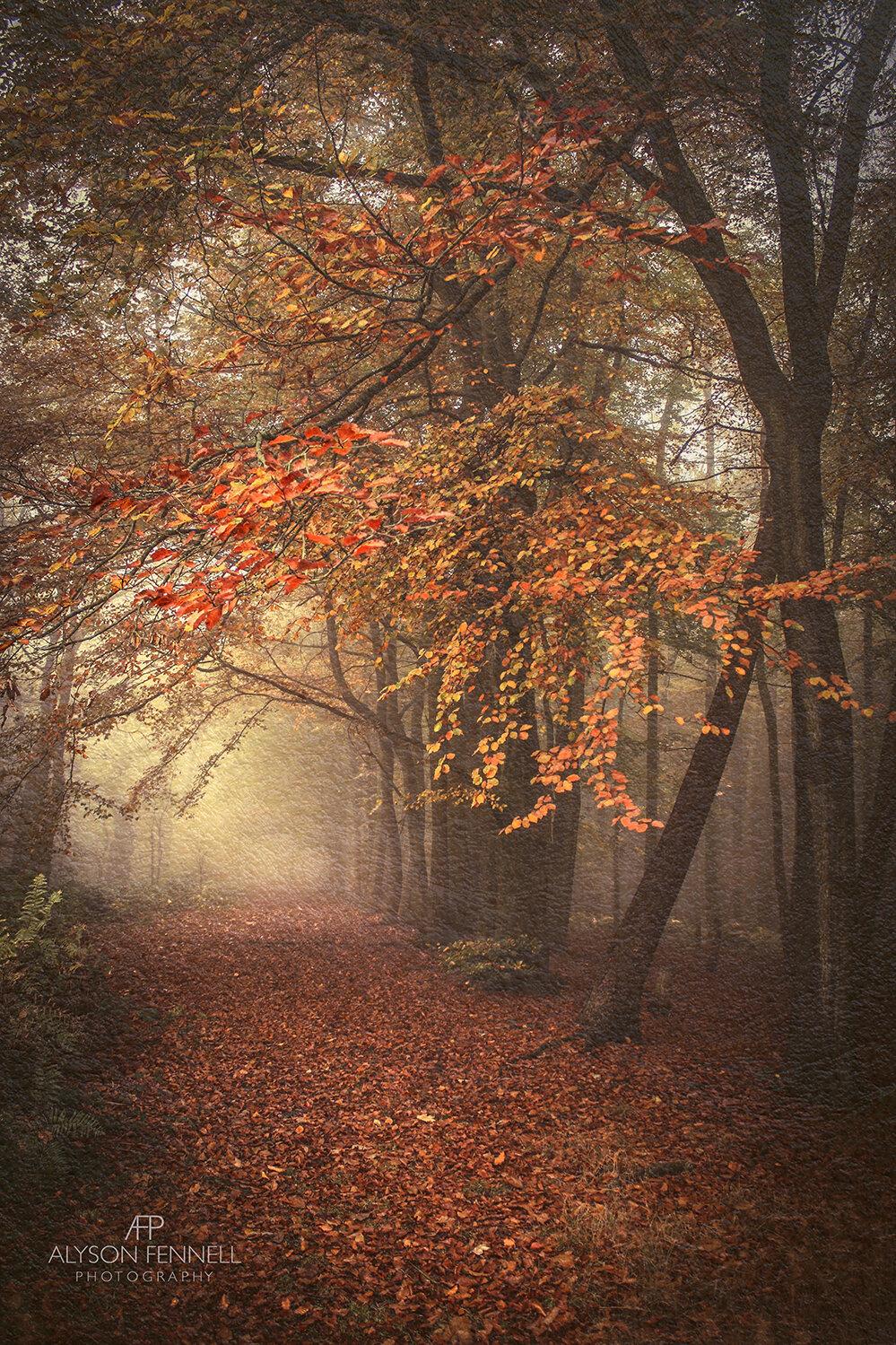 Autumnal Misty Woodland