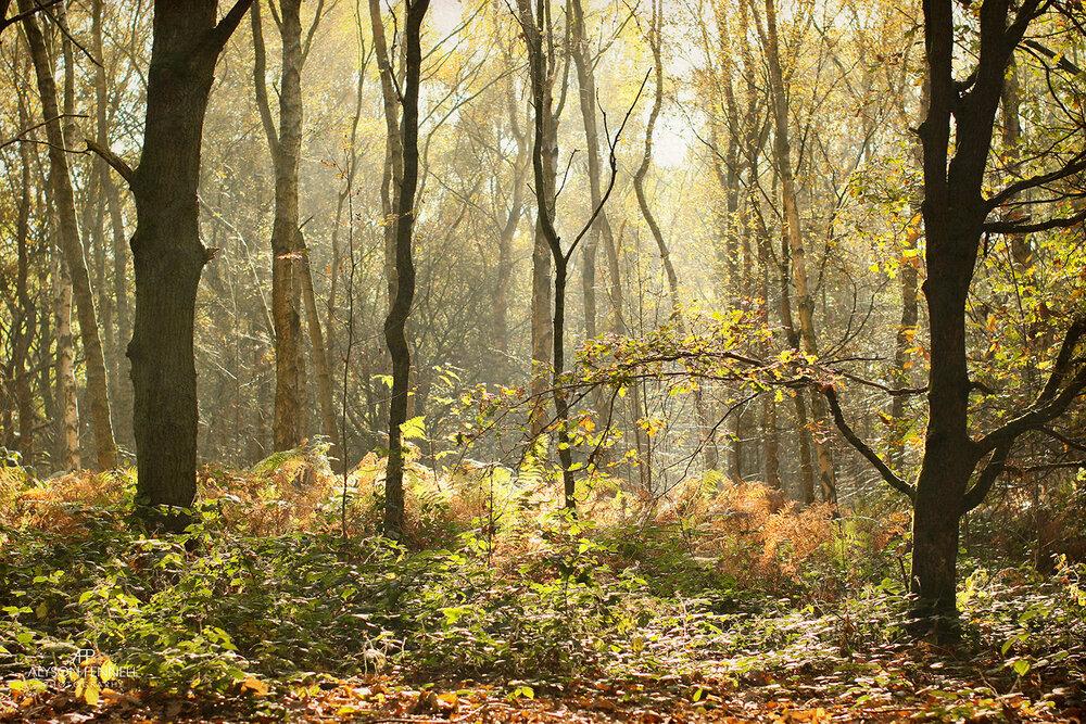Autumn Morning Trees
