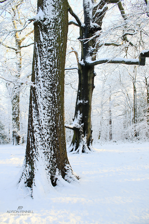 Snowy Winter Trees