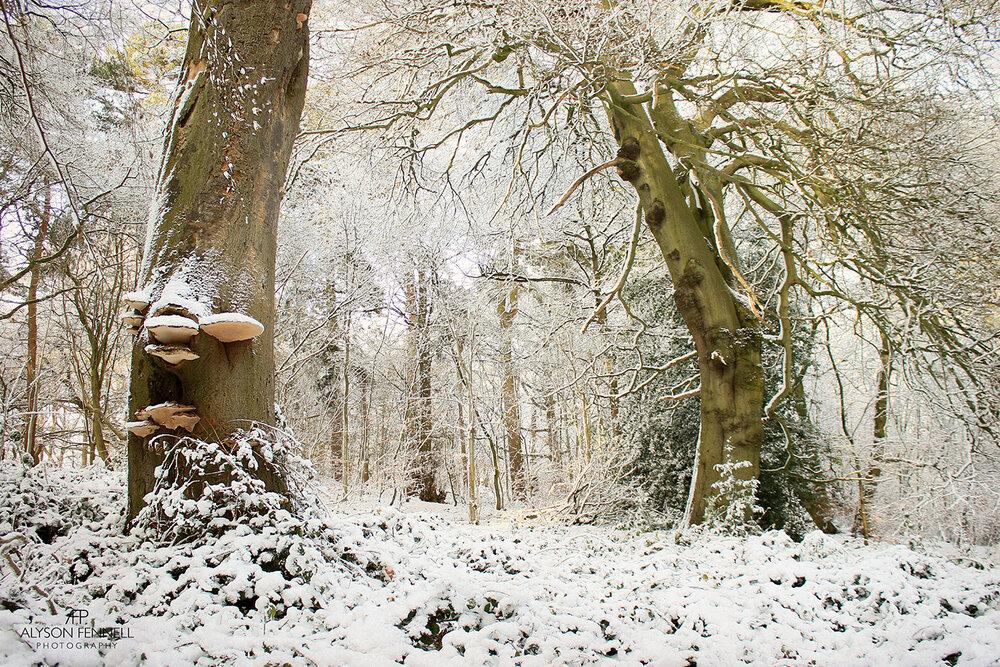 Winter Morning Woodland