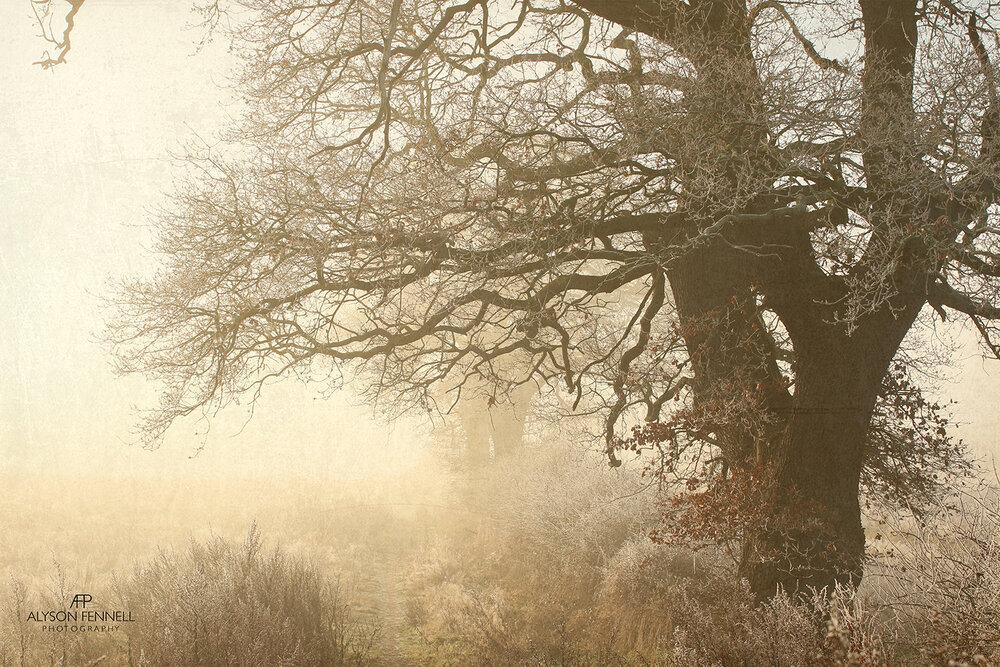 Foggy Winter Morning Tree