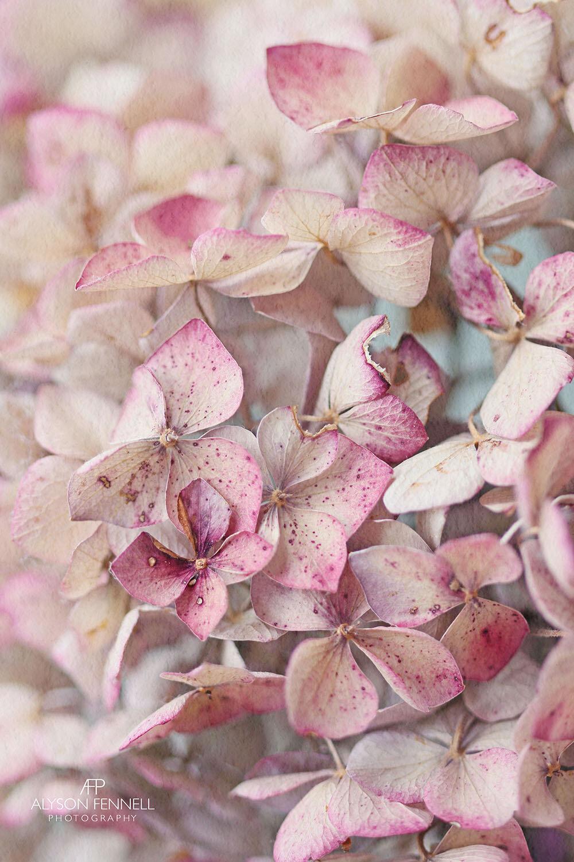 Vintage Hydrangea Petals