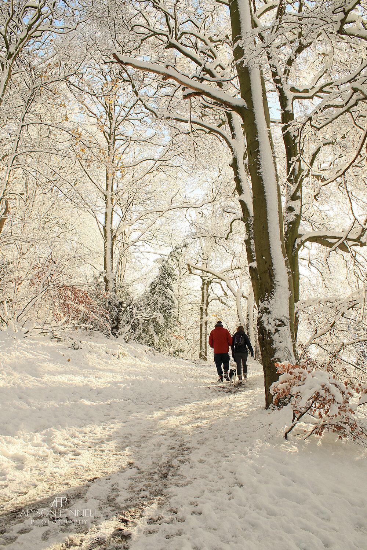 Walking in a Winter Woodland