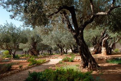 Mount of Olives