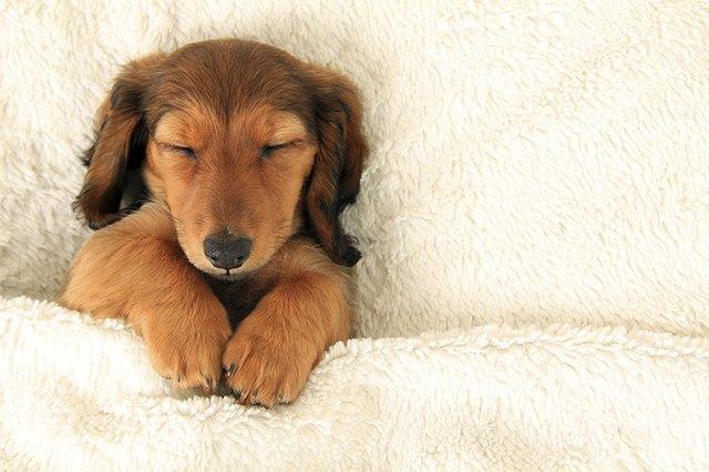 Why-Do-Dogs-Sleep-All-the-Time.jpg
