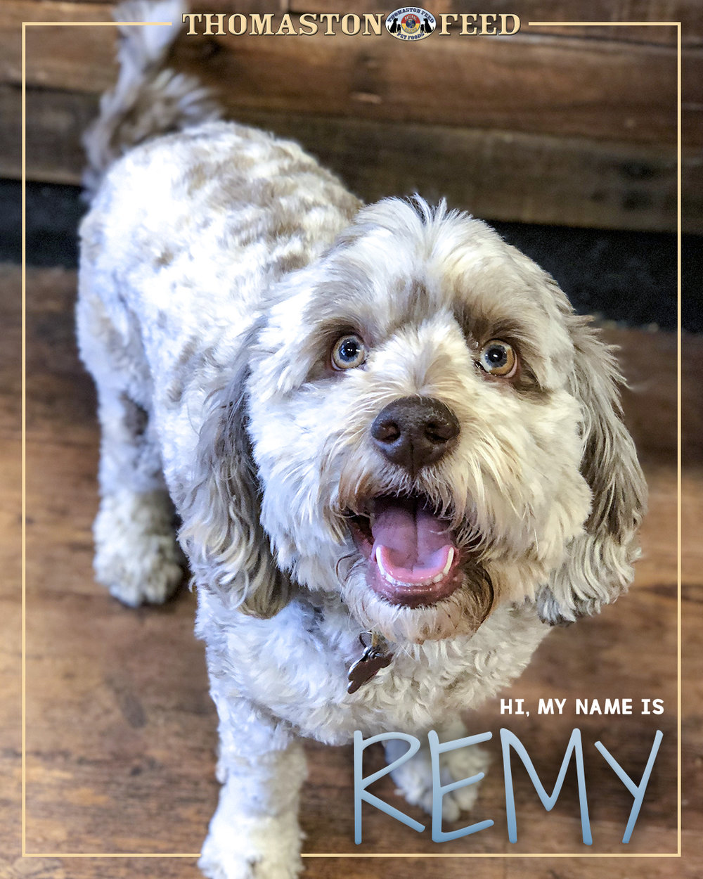 Remy.jpg