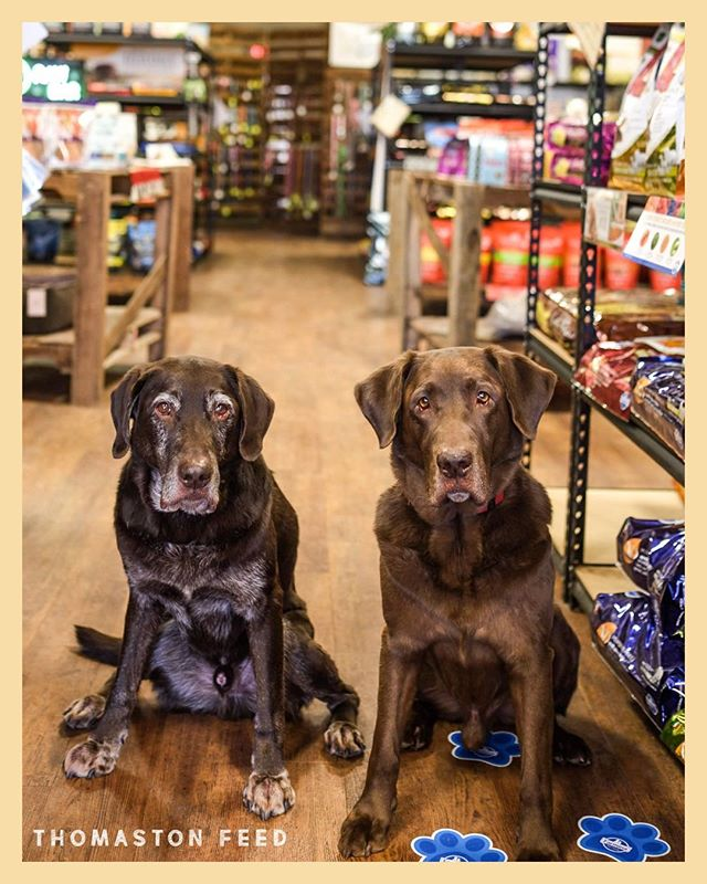Keeper and Striker are serious in their support of #SmallBusinessSaturday 🤨  Do your part & #ShopLocal today!  #ThomastonFeedNJ #SmallBusiness #LocalBusiness #RiverValeNJ #BergenCounty #DogsOfInstagram