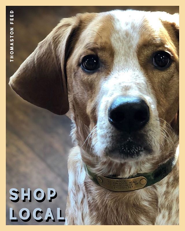 Celebrate #NationalPuppyDay and #ShopLocal this Saturday at Thomaston Feed 🐶  From treats to toys, we offer the most beneficial products for your pup or kitty! Show support for your #localbusiness today 🛍