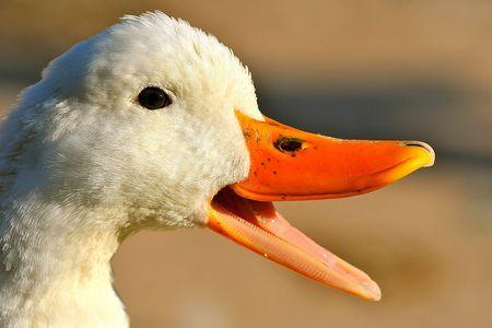 duck bill.jpg