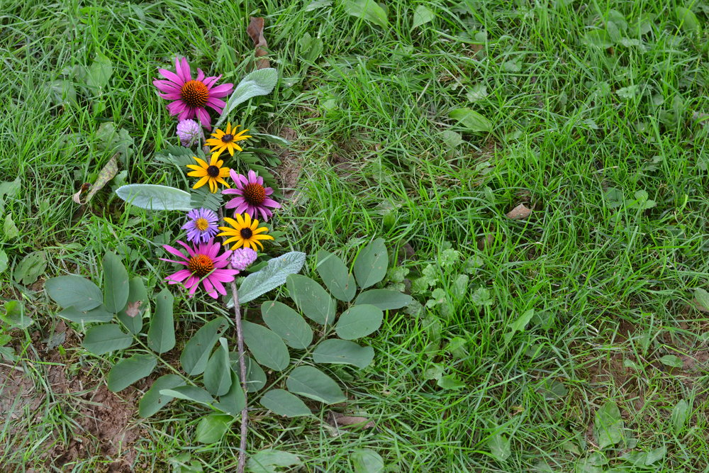 Nature Therapy &The Frederick NatureCompany -