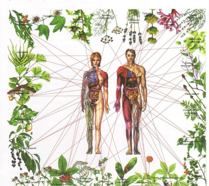 Plant Medicine for Health and Healing - Before mainstream medicine and man-made drugs, there was nature. Nature gives us a great diversity of herbs, plants and trees. Our ancestors knew how to use plants as medicine to support imbalances in physical, mental, emotional, and spiritual health. Unfortunately, we aren't as connected with what is around us as we once were. Our aim in providing plant and food medicine consultations is to reconnect us with our relationship to the natural world and it's healing properties for the many ailments we experience today.Working with a mental health and herbal clinician is a unique way to empower your healing journey and receive guidance and support along the way. A conversation entailing health history, symptom patterns, lifestyle, and nutrition will ensue to enable an understanding of where a person is, has been, and where they want to be. Participants will be engaged in conversation on how they want to heal and flourish and a custom formulation of plant medicine will be blended to support each person in their unique and individual process. This could be a tea, tincture, powder, oil blend, or salve.Call, text or email for free consultation.