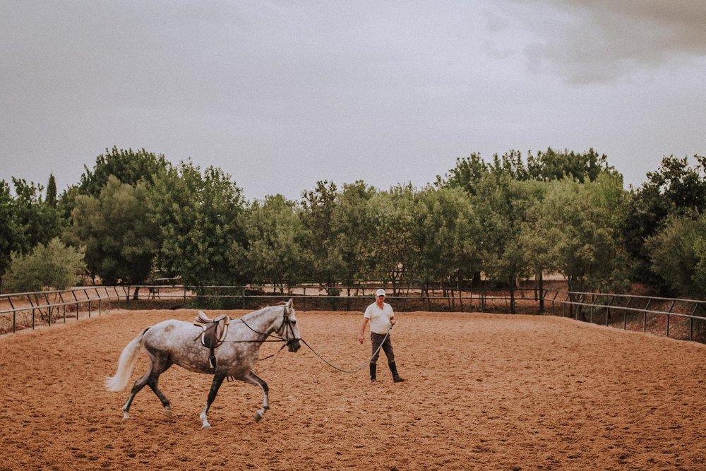 20.00  / Unghesten Solidaria er sist ut før middag. Alfonso skolerer henne for den norske eieren som falt så hardt for stedet og hestene at hun kjøpte et spansk føll og overlot dannelsesreisen hennes til Alfonso. Bedre hender kan man vel ikke rekke tøylene til.