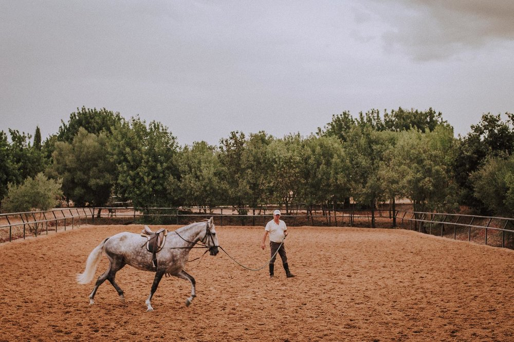 20.00 /  Young Solidaria is last to go before dinner. Alfonso is schooling her for her Norwegian owner who fell so hard fo the place and the horsed that she bought a Spanish foal and handed Alfonso the reins and the task of educating her.