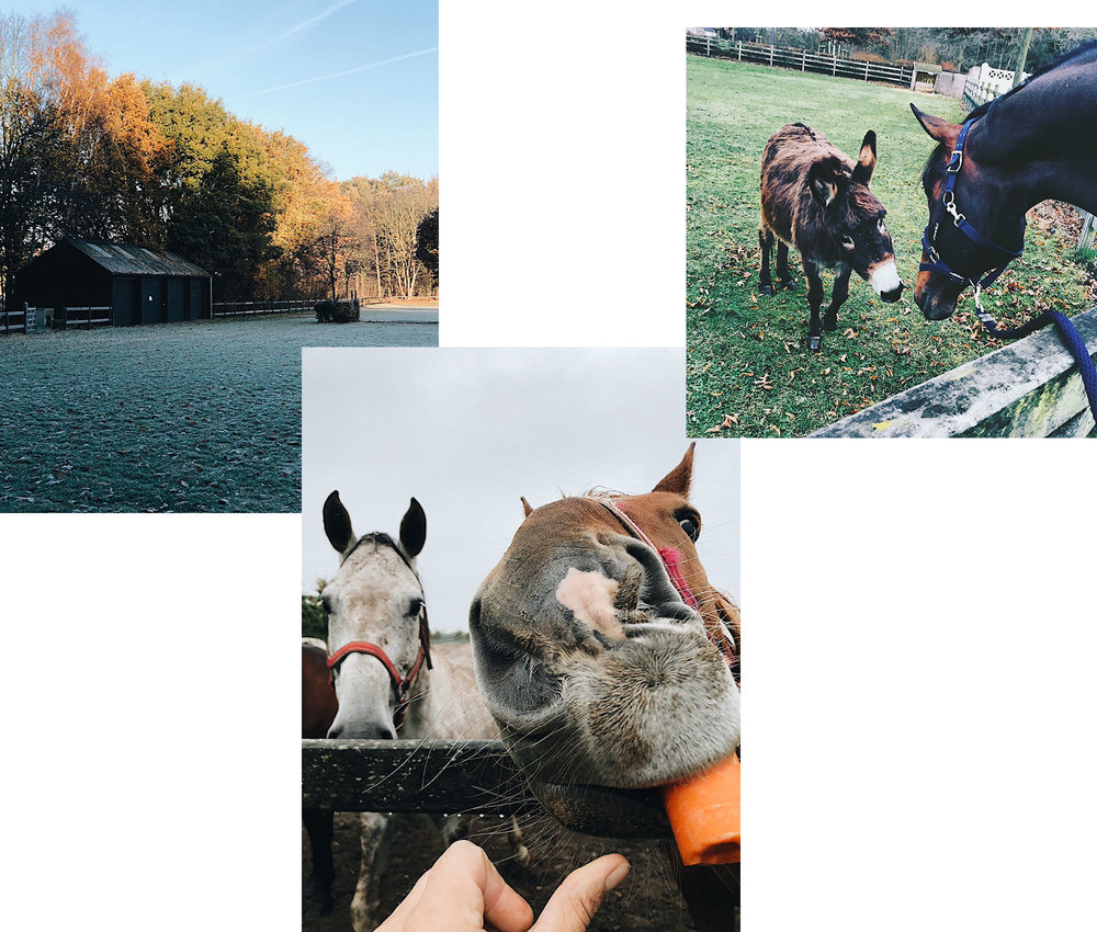 Glimpses from the Philippaerts stables: The grass arena, Forever on a morning stroll, and one of Nicola's favorite horses, Donatella, enjoying her retirement