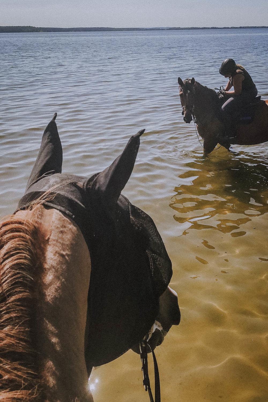 Svømmetur i sjøen hjemme. Bokstavelig talt, siden Balahe [en av Irmas andre topphester, red.anm] passet på å rulle seg i vannet med groomen Julia på ryggen.