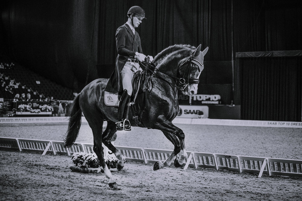 TEXTING WITH: DANIEL BACHMANN ANDERSEN - This 28 year old Dane is a true family-man and one of the world's best dressage riders. With a humble approach to the sport, he feels that the ability to understand horses is the most important skill for all riders.
