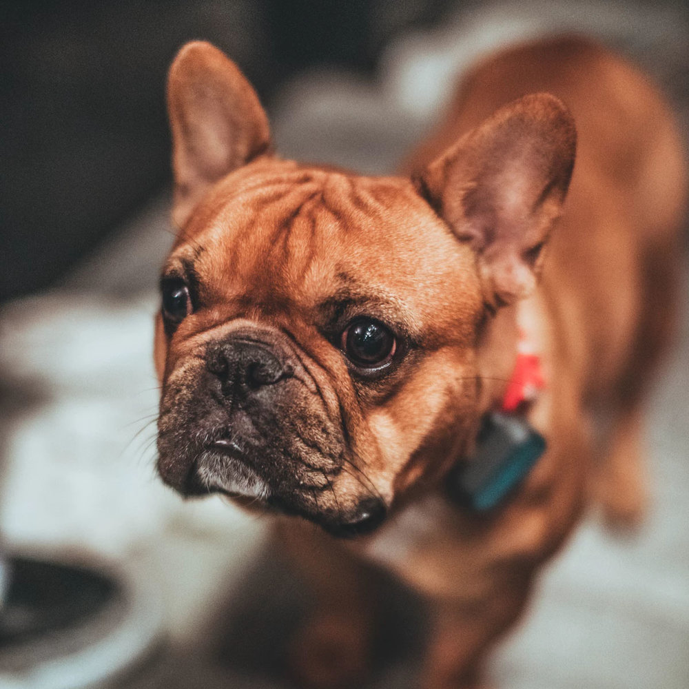 A picture of a cute dog might help since we couldn't find the page you were looking for.