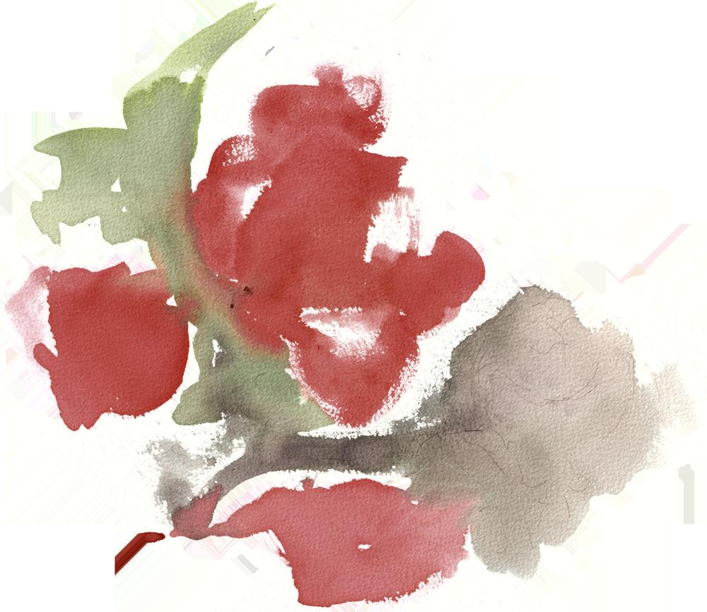 Rose2_edit2-transparent.png
