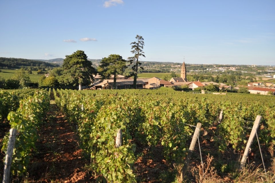 Pilgrimage to burgundy - On the Paths Surrounding the Cote d'Or