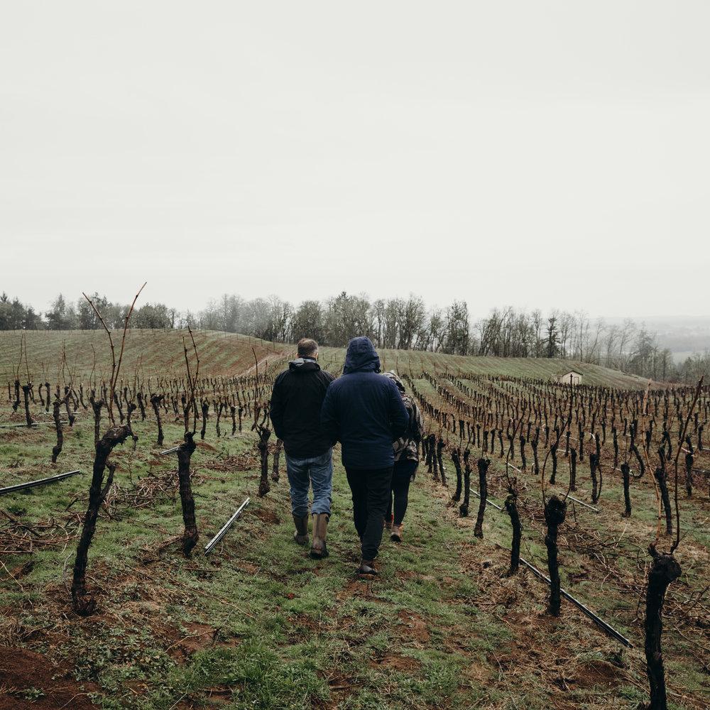 Walter Scott - Organic Grapes Organic Wine in Eola Amity HIlls Oregon