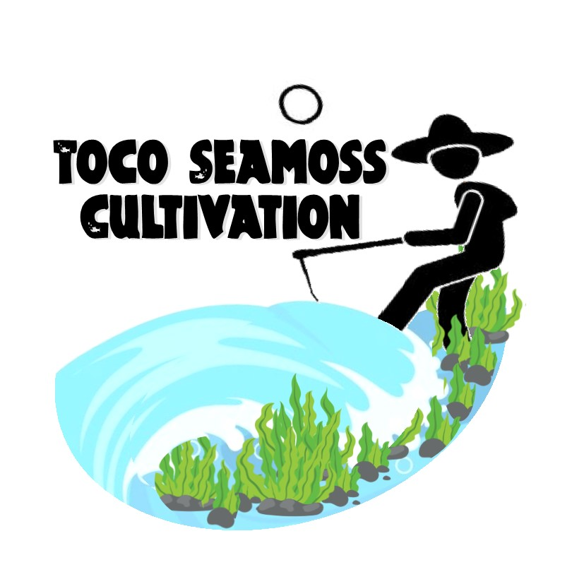 Toco Seamoss Cultivation.jpg