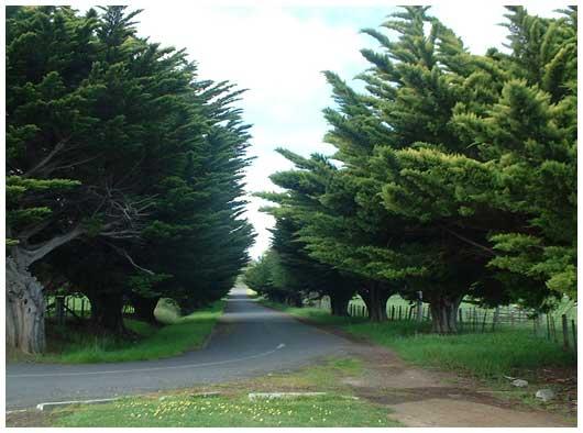 Kempton Memorial Avenue, 2005.