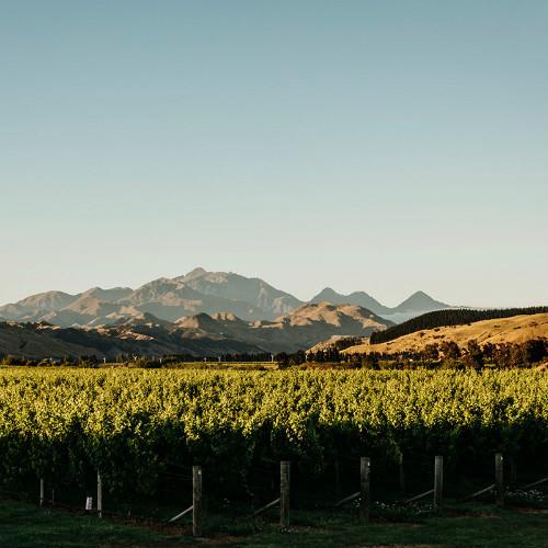 Our vineyard - Whenua Awa