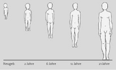 newborn 2 years - 6 years - 12 years - 21 years    Fig. 1a:    Metamorphosis of the human body shape, with the transition from nerve-sense dominance to increasing limb-development. The maximum manifestation of diabetes type 1—between age 14 and 20—coincides with most intense limb development. (From:  Husemann A. Der musikalische Bau des Menschen. Entwurf einer plastisch-musikalischen Menschenkunde. Verlag Freies Geistesleben,  2nd Edition 1989)