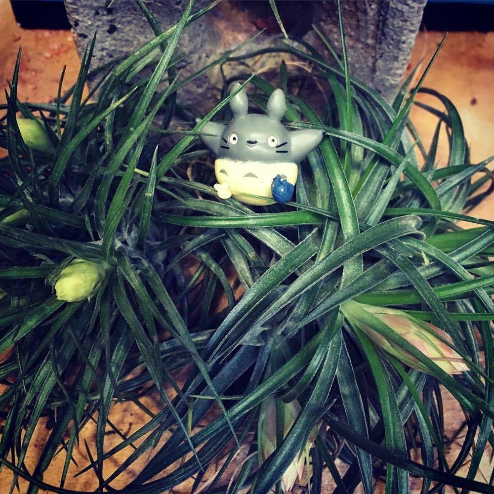 Totoro! Anything Mikazaki, really.......