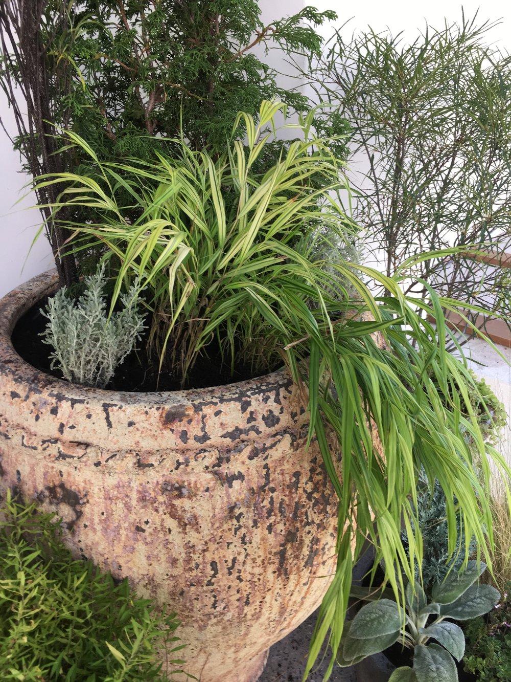 Suraya , the garden