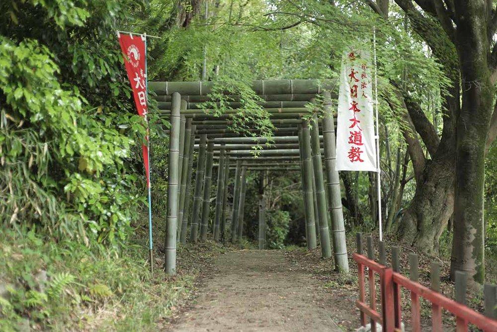 bamboo-torii.jpg