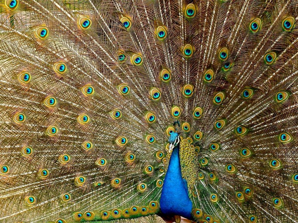 animal-bird-colorful-45911.jpg