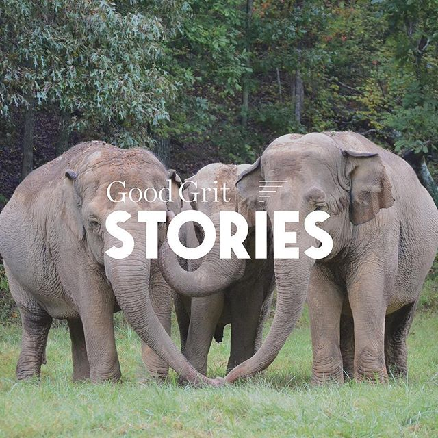 No one imagines elephants in Tennessee, but for a certain sanctuary in the lower-middle portion of the state, elephants aren't imaginary. Discover the story of The Elephant Sanctuary of Hohenwald, Tennessee and how Carol Buckley and Scott Blais created a haven of safety for former performing elephants.