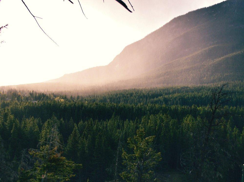fog-foggy-forest-96491 (1).jpg
