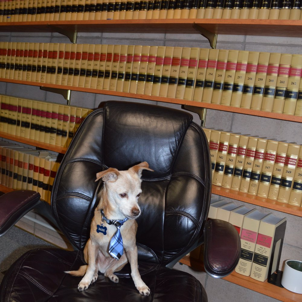 Dade - Office Dog