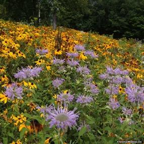wildflowers2.jpg